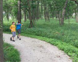 Fuzzymama Walk in the Woods 900x720